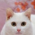 cat_zhang
