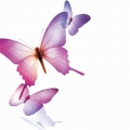 飞越沧海的蝴蝶