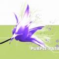紫色雪仙的个人空间